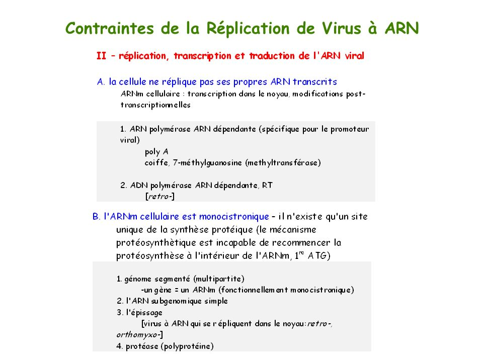 Contraintes de la Réplication de Virus à ARN