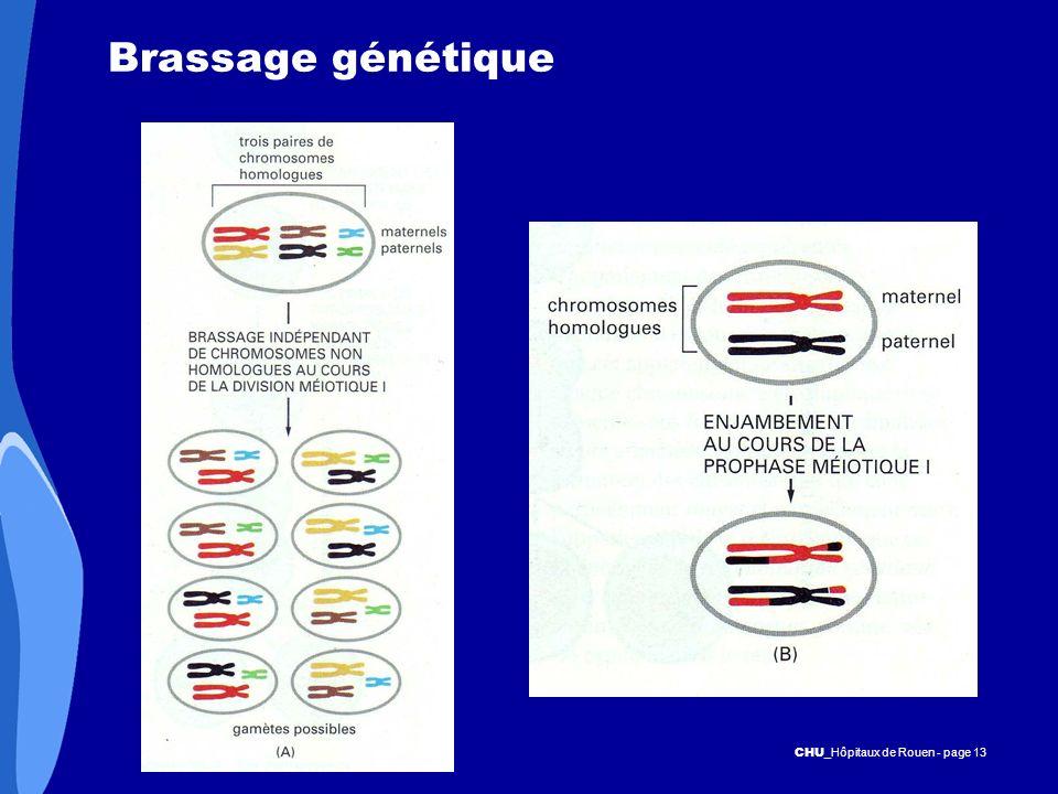 Brassage génétique