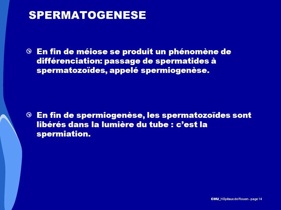 SPERMATOGENESE En fin de méiose se produit un phénomène de différenciation: passage de spermatides à spermatozoïdes, appelé spermiogenèse.