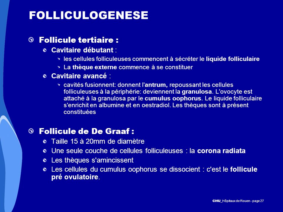 FOLLICULOGENESE Follicule tertiaire : Follicule de De Graaf :