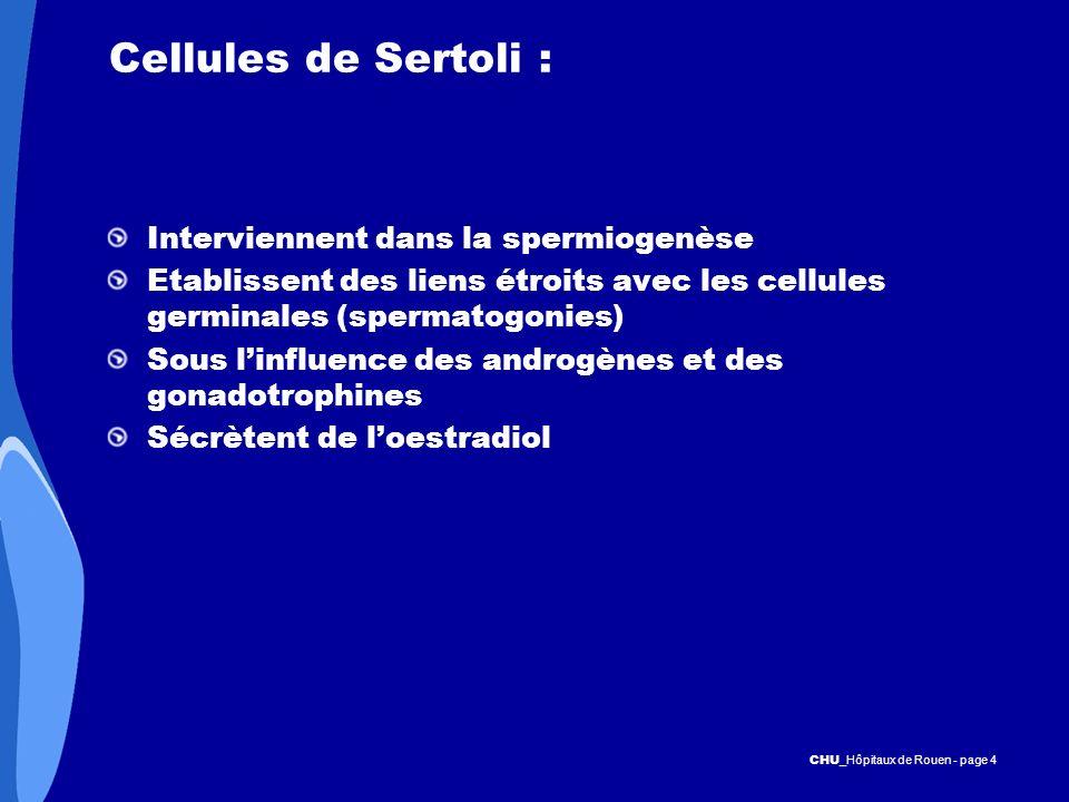 Cellules de Sertoli : Interviennent dans la spermiogenèse