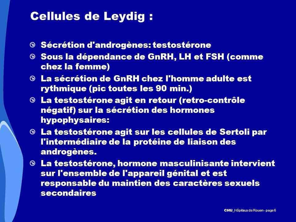 Cellules de Leydig : Sécrétion d androgènes: testostérone