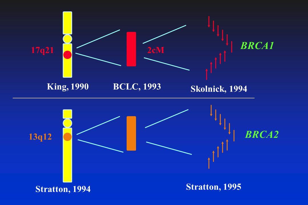 BRCA1 BRCA2 17q21 2cM King, 1990 BCLC, 1993 Skolnick, 1994 13q12