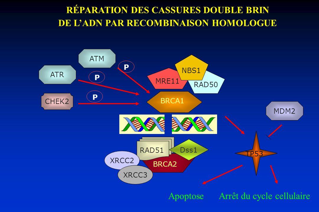 RÉPARATION DES CASSURES DOUBLE BRIN