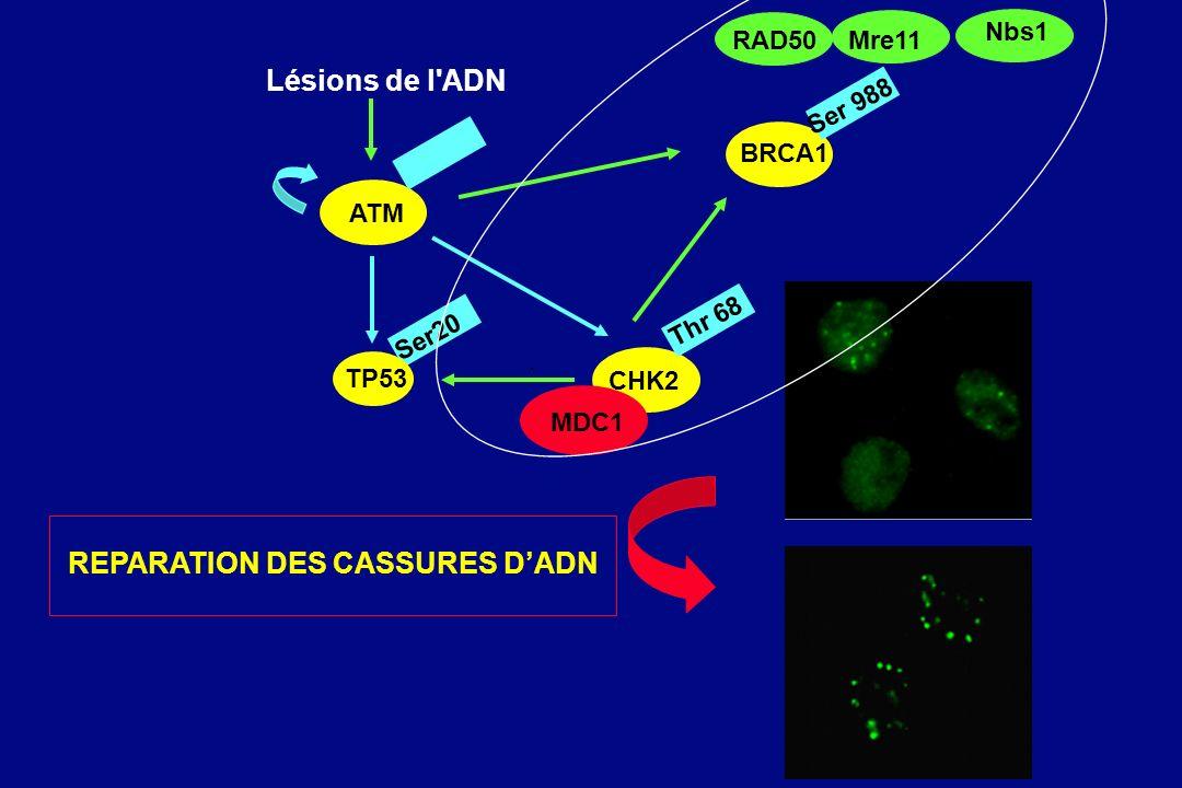 REPARATION DES CASSURES D'ADN