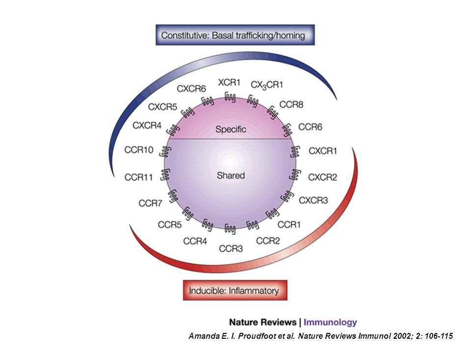 Amanda E. I. Proudfoot et al. Nature Reviews Immunol 2002; 2: 106-115