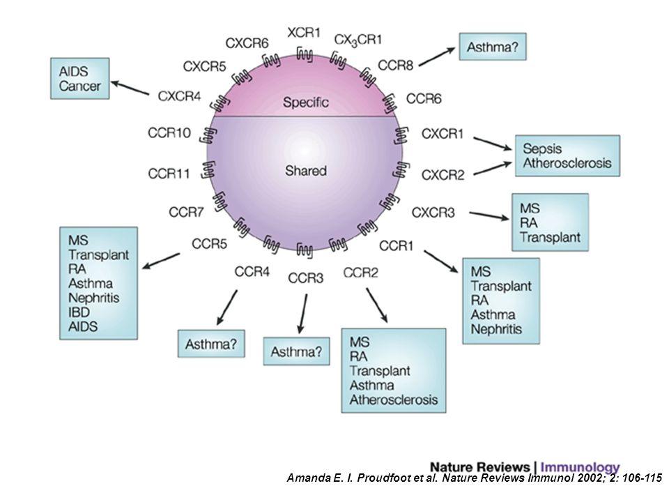 Amanda E. I. Proudfoot et al. Nature Reviews Immunol 2002; 2: 106-115