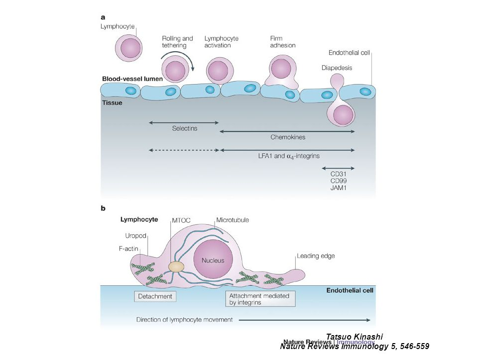 Nature Reviews Immunology 5, 546-559