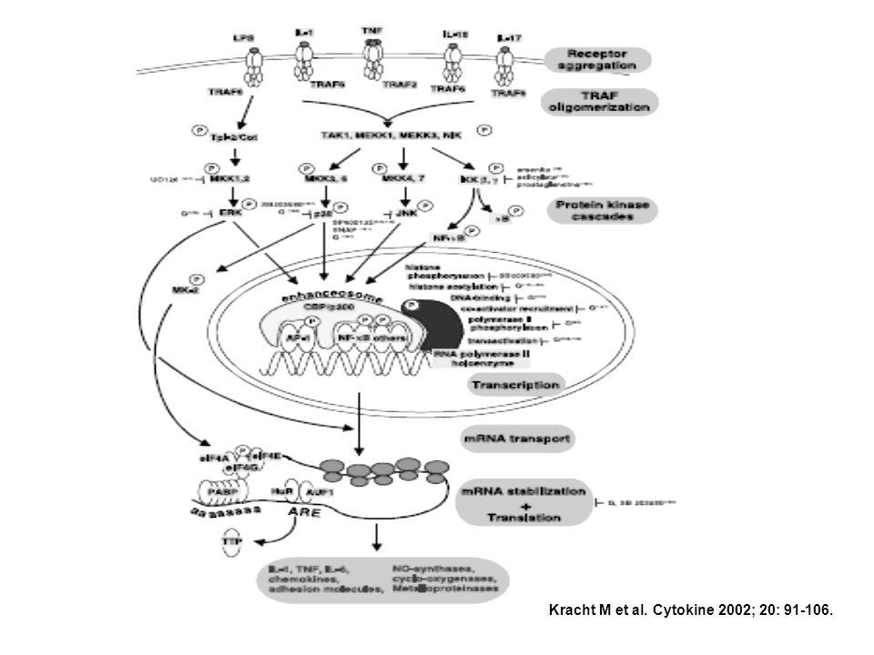 Kracht M et al. Cytokine 2002; 20: 91-106.