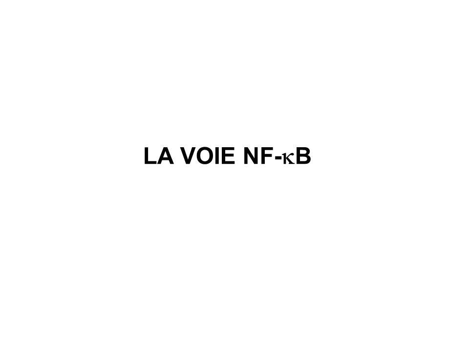 LA VOIE NF-B