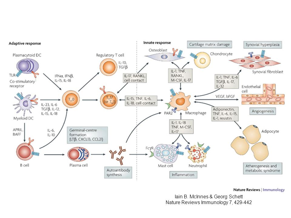 Iain B. McInnes & Georg Schett Nature Reviews Immunology 7, 429-442