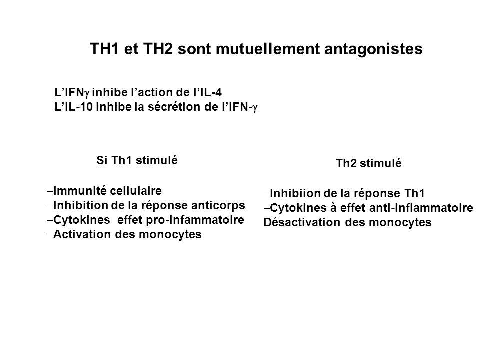 TH1 et TH2 sont mutuellement antagonistes