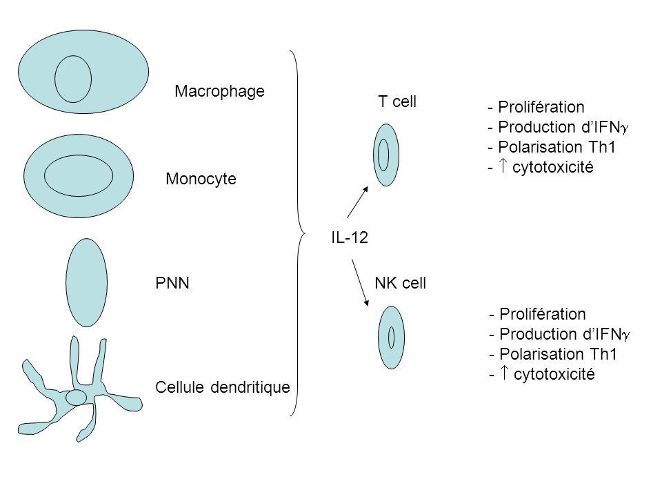 MacrophageT cell. - Prolifération. - Production d'IFN - Polarisation Th1. -  cytotoxicité. Monocyte.