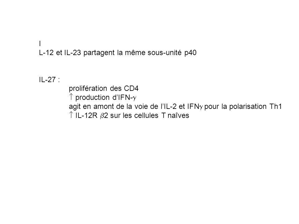 IL-12 et IL-23 partagent la même sous-unité p40. IL-27 : prolifération des CD4.  production d'IFN-