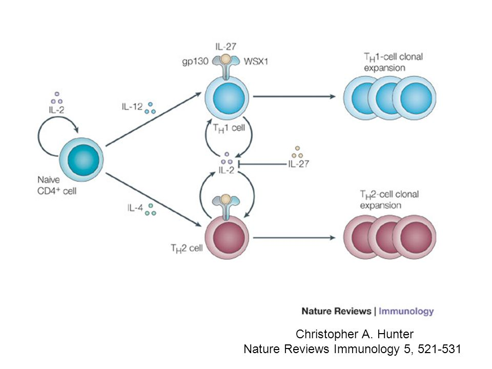 Nature Reviews Immunology 5, 521-531