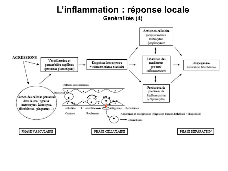L'inflammation : réponse locale