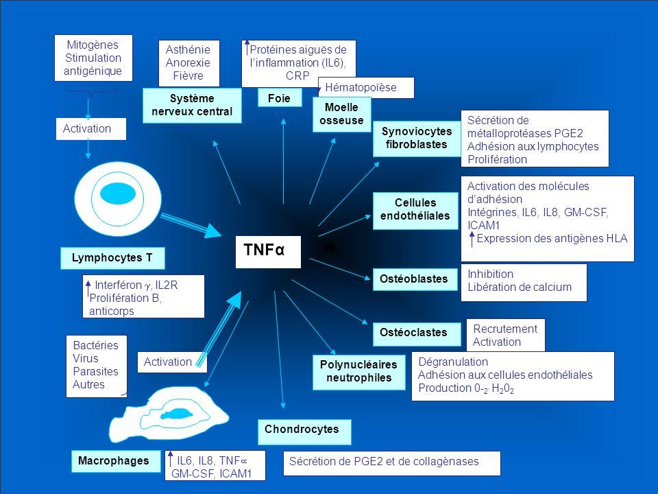 TNFα Mitogènes Stimulation antigénique Asthénie Anorexie Fièvre