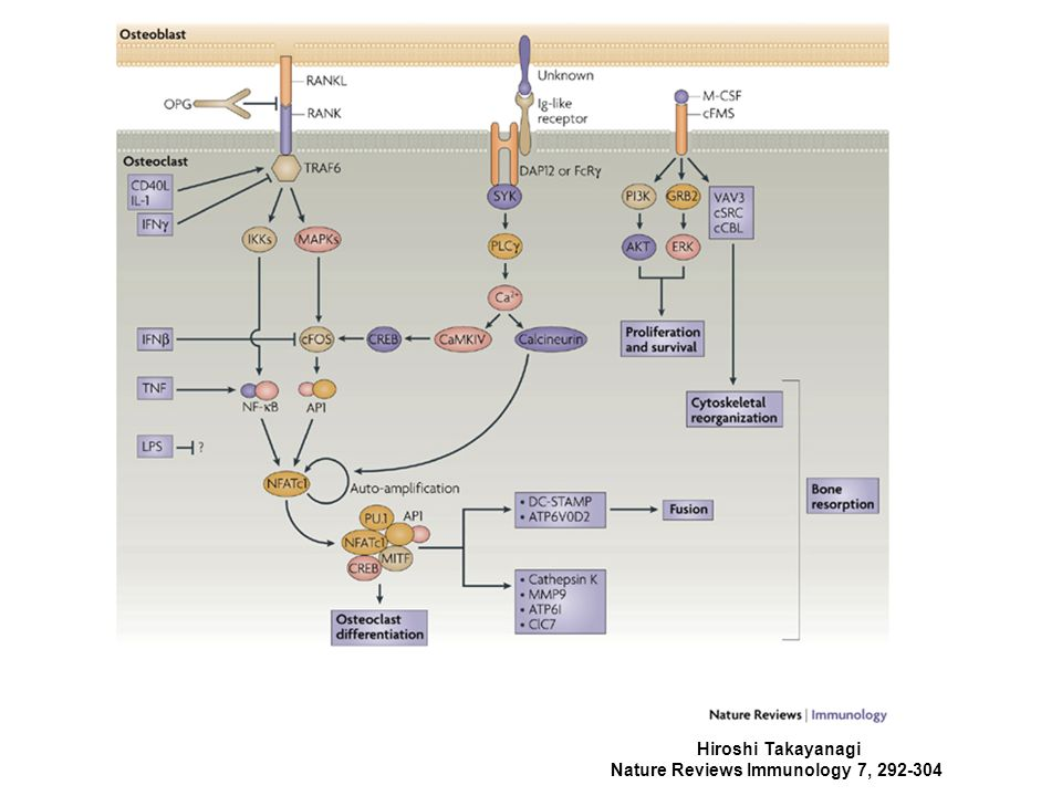 Nature Reviews Immunology 7, 292-304