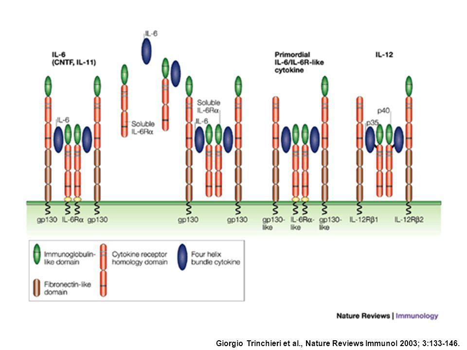 Giorgio Trinchieri et al., Nature Reviews Immunol 2003; 3:133-146.