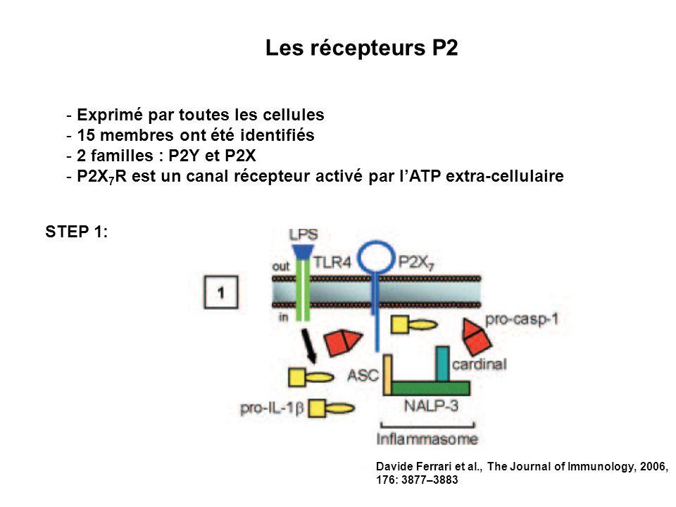 Les récepteurs P2 Exprimé par toutes les cellules