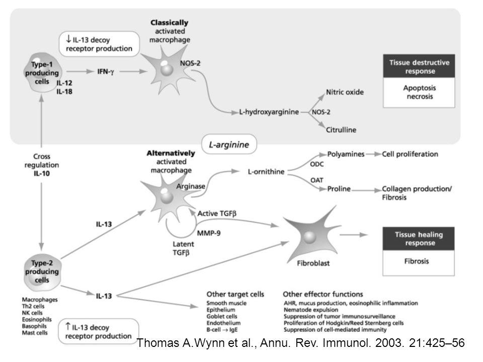 Thomas A.Wynn et al., Annu. Rev. Immunol. 2003. 21:425–56