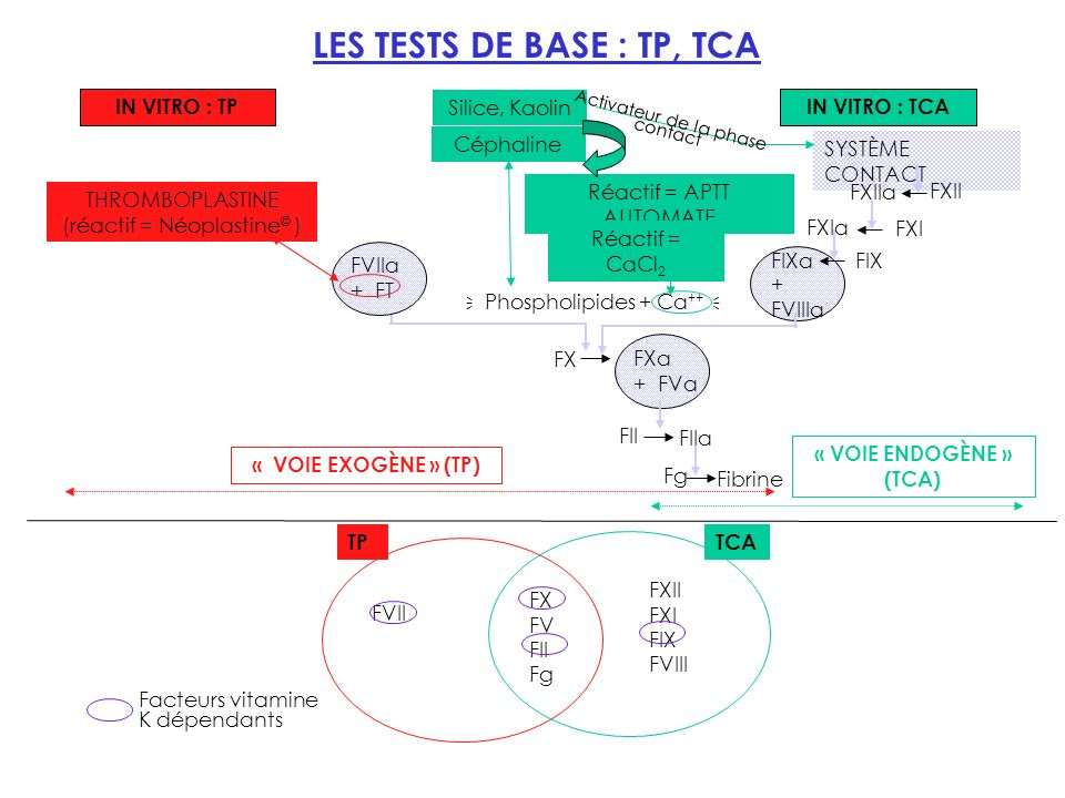 LES TESTS DE BASE : TP, TCA