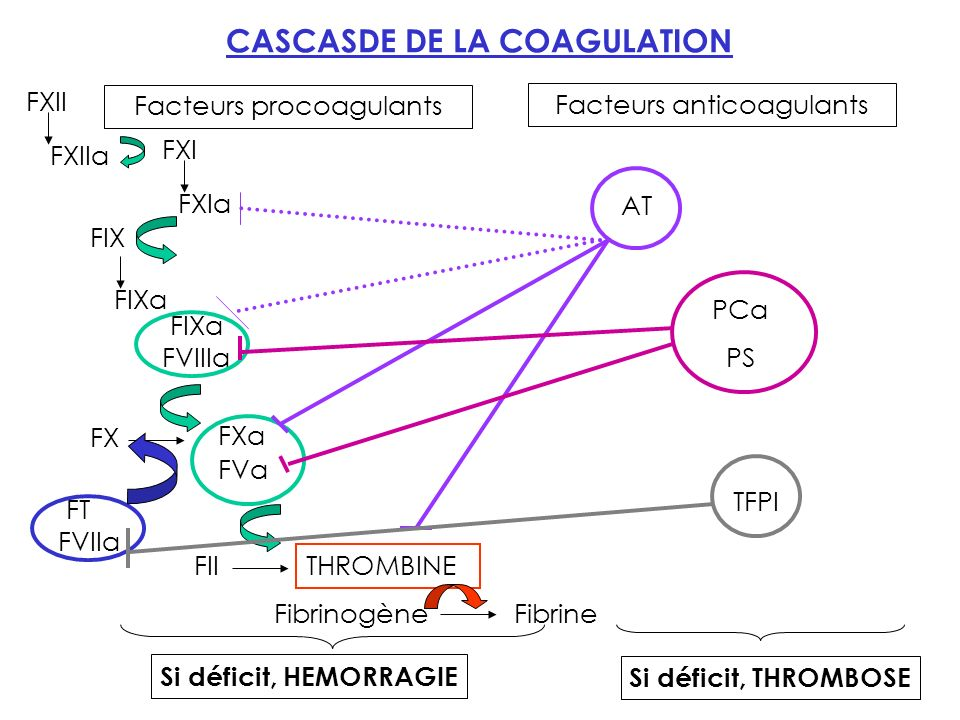 CASCASDE DE LA COAGULATION