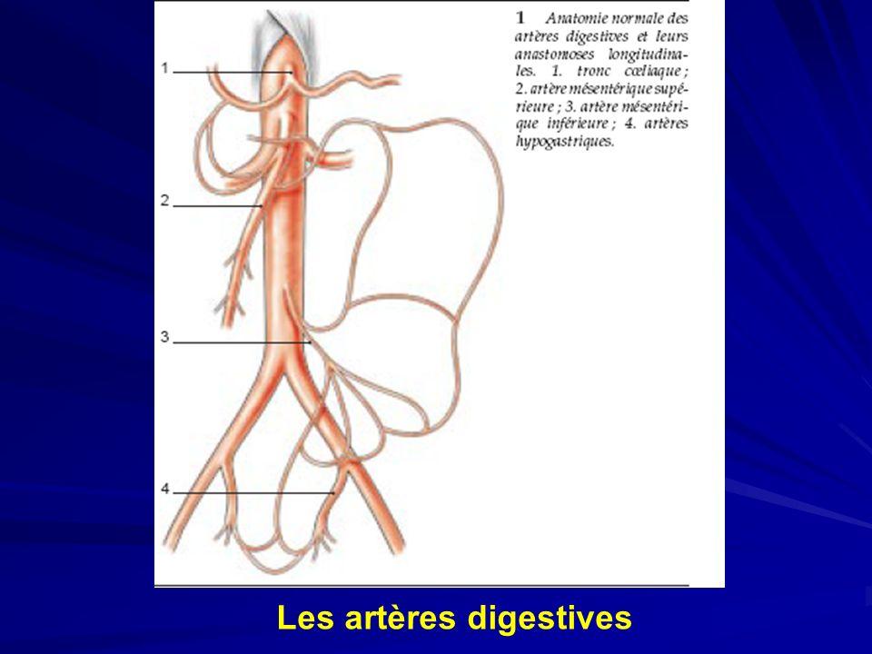 Les artères digestives
