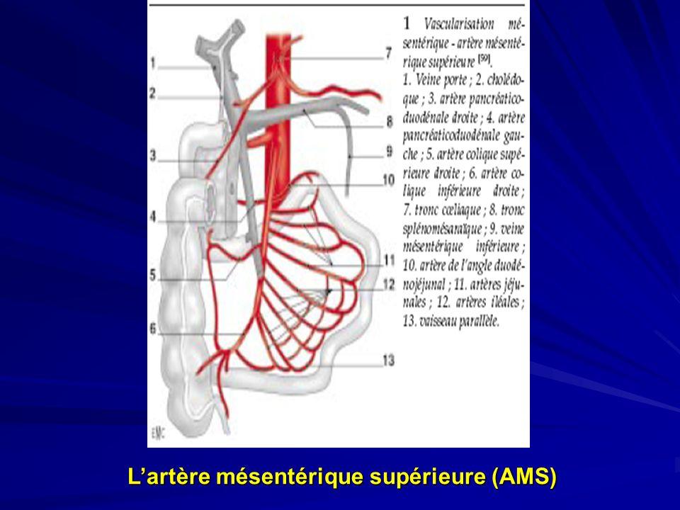 L'artère mésentérique supérieure (AMS)