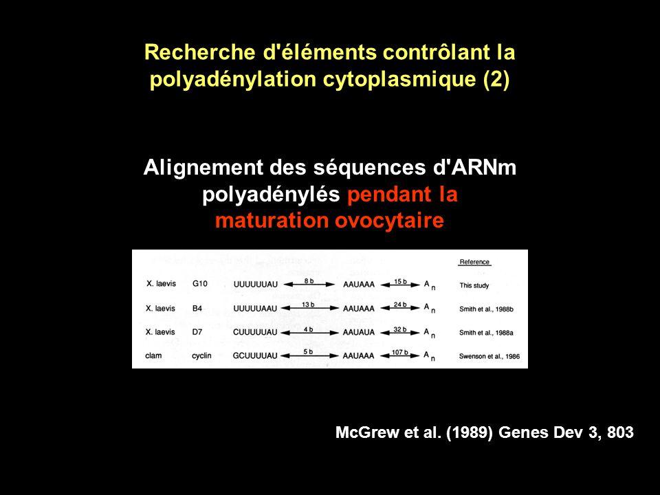 Recherche d éléments contrôlant la polyadénylation cytoplasmique (2)