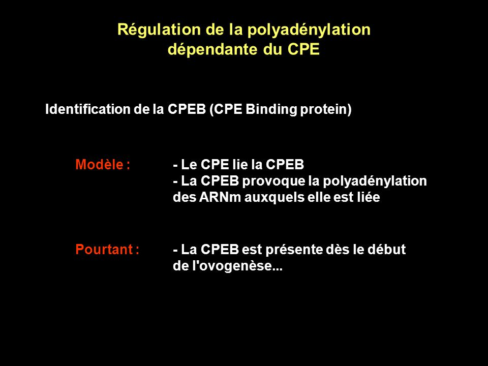 Régulation de la polyadénylation