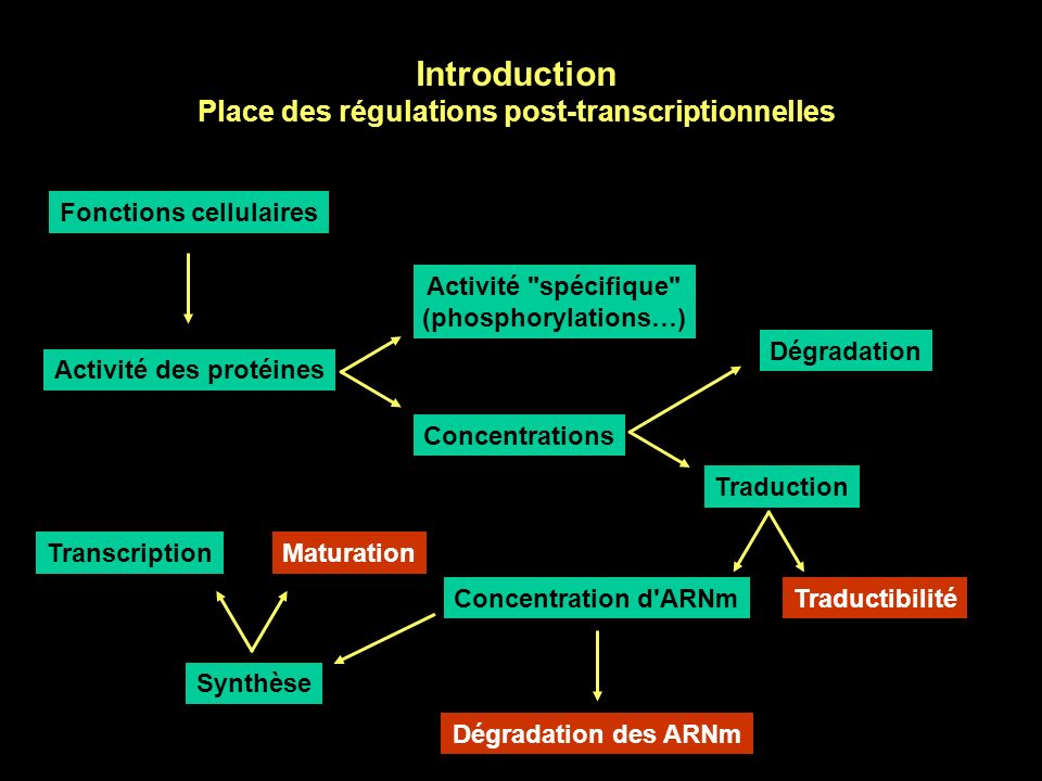 Introduction Place des régulations post-transcriptionnelles