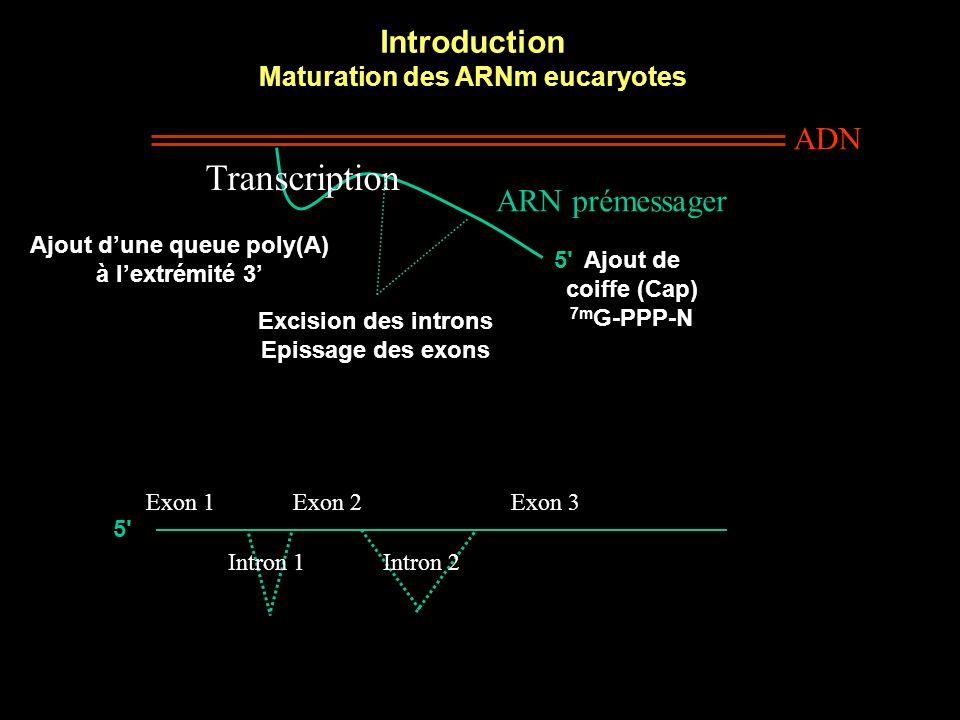 Maturation des ARNm eucaryotes Ajout d'une queue poly(A)