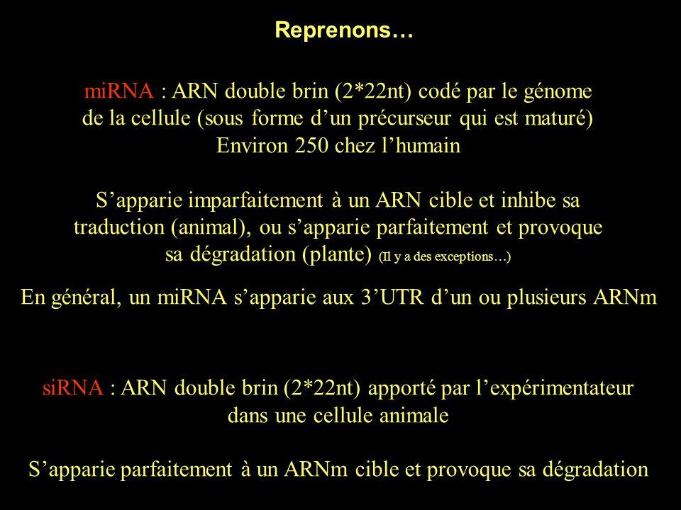 miRNA : ARN double brin (2*22nt) codé par le génome