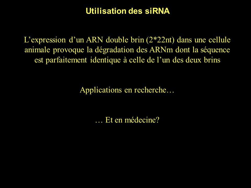 L'expression d'un ARN double brin (2*22nt) dans une cellule