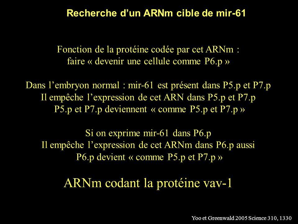 Recherche d'un ARNm cible de mir-61
