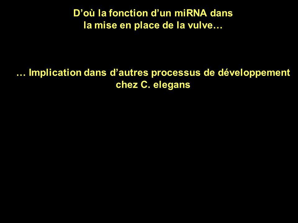D'où la fonction d'un miRNA dans la mise en place de la vulve…