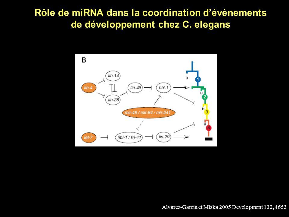Rôle de miRNA dans la coordination d'évènements