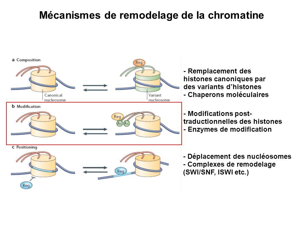 Mécanismes de remodelage de la chromatine