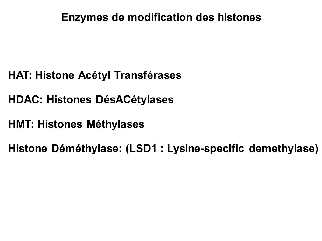 Enzymes de modification des histones