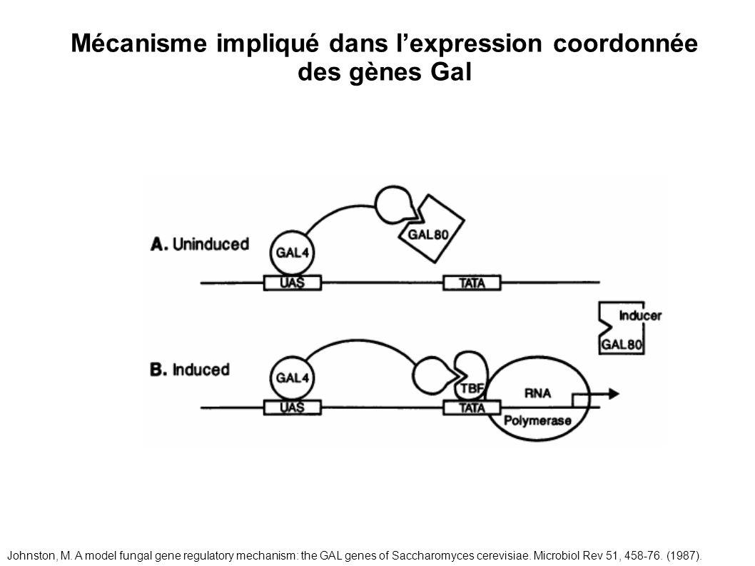 Mécanisme impliqué dans l'expression coordonnée des gènes Gal