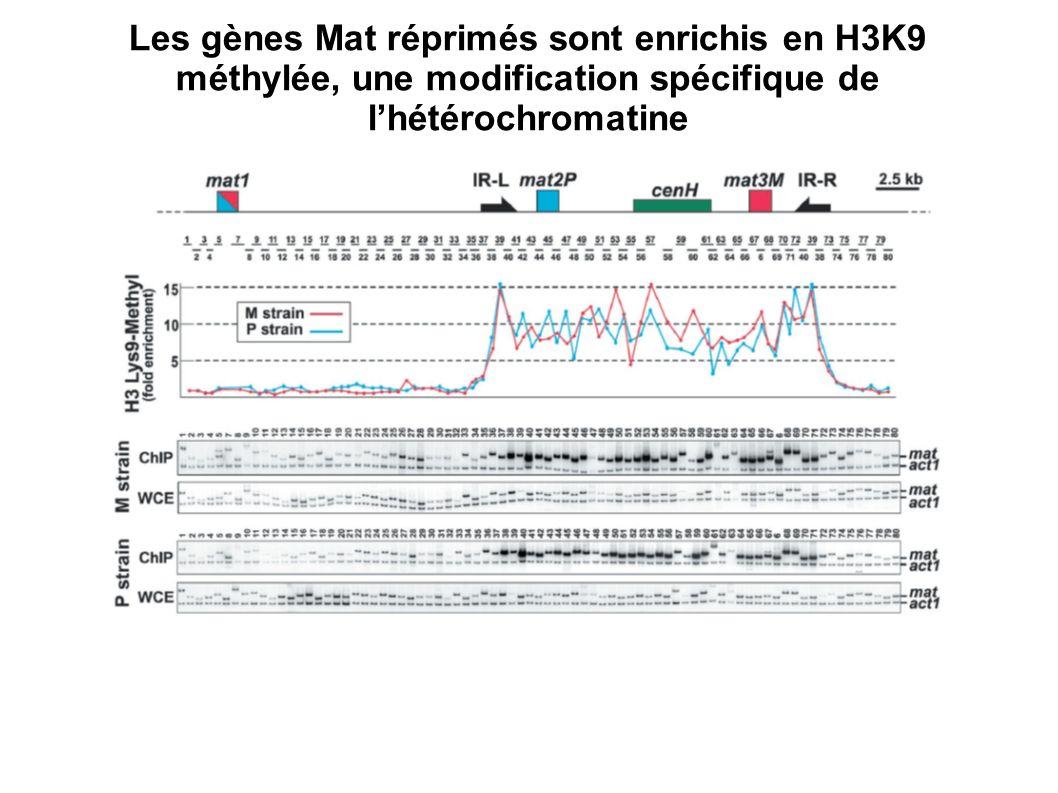 Les gènes Mat réprimés sont enrichis en H3K9 méthylée, une modification spécifique de l'hétérochromatine
