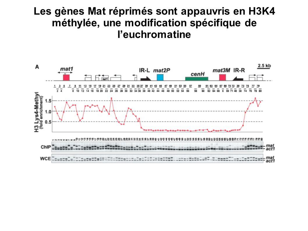 Les gènes Mat réprimés sont appauvris en H3K4 méthylée, une modification spécifique de l'euchromatine