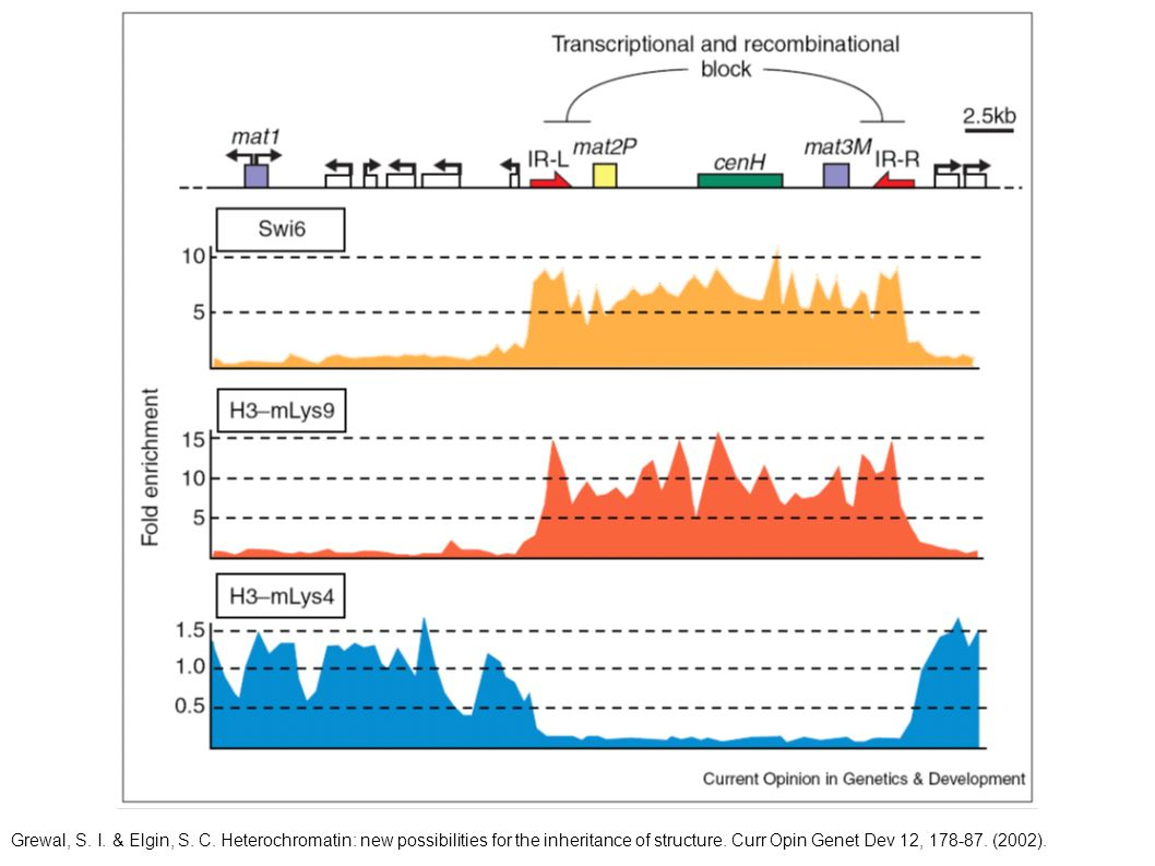 Grewal, S.I. & Elgin, S. C. Heterochromatin: new possibilities for the inheritance of structure.
