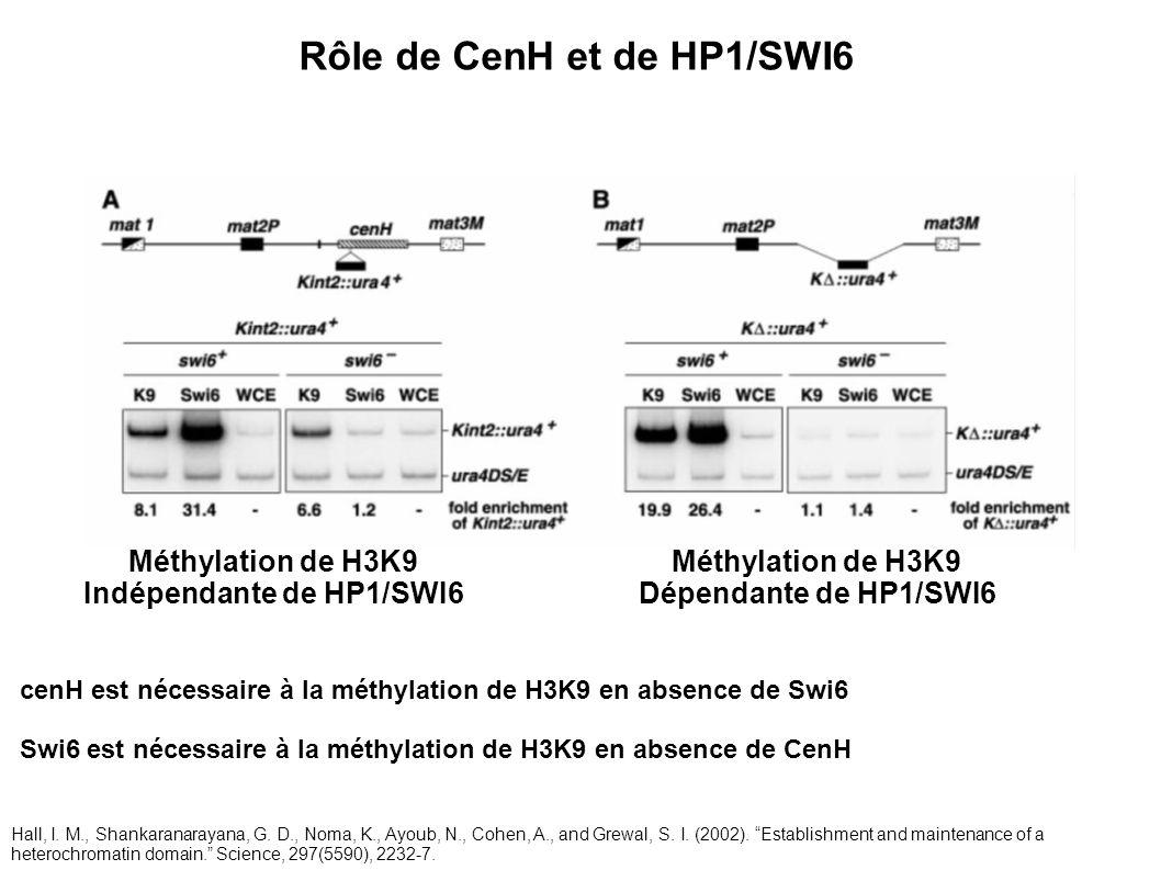 Rôle de CenH et de HP1/SWI6 Indépendante de HP1/SWI6