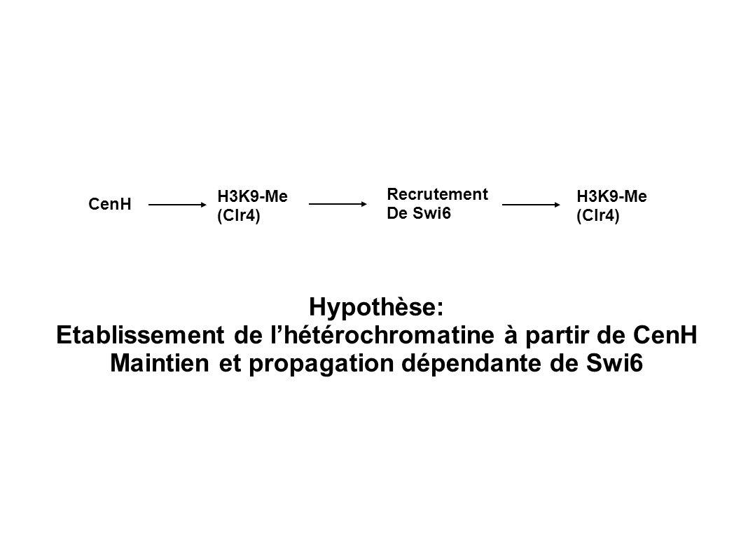 Etablissement de l'hétérochromatine à partir de CenH