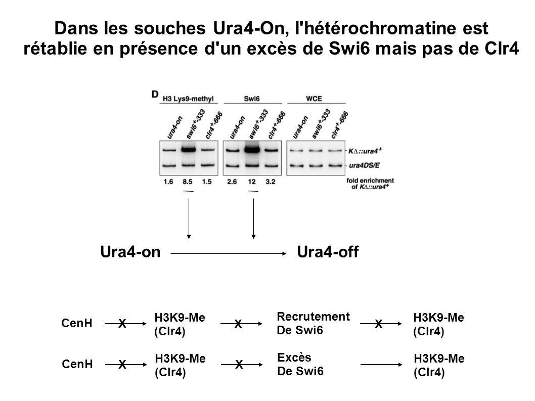 Dans les souches Ura4-On, l hétérochromatine est rétablie en présence d un excès de Swi6 mais pas de Clr4