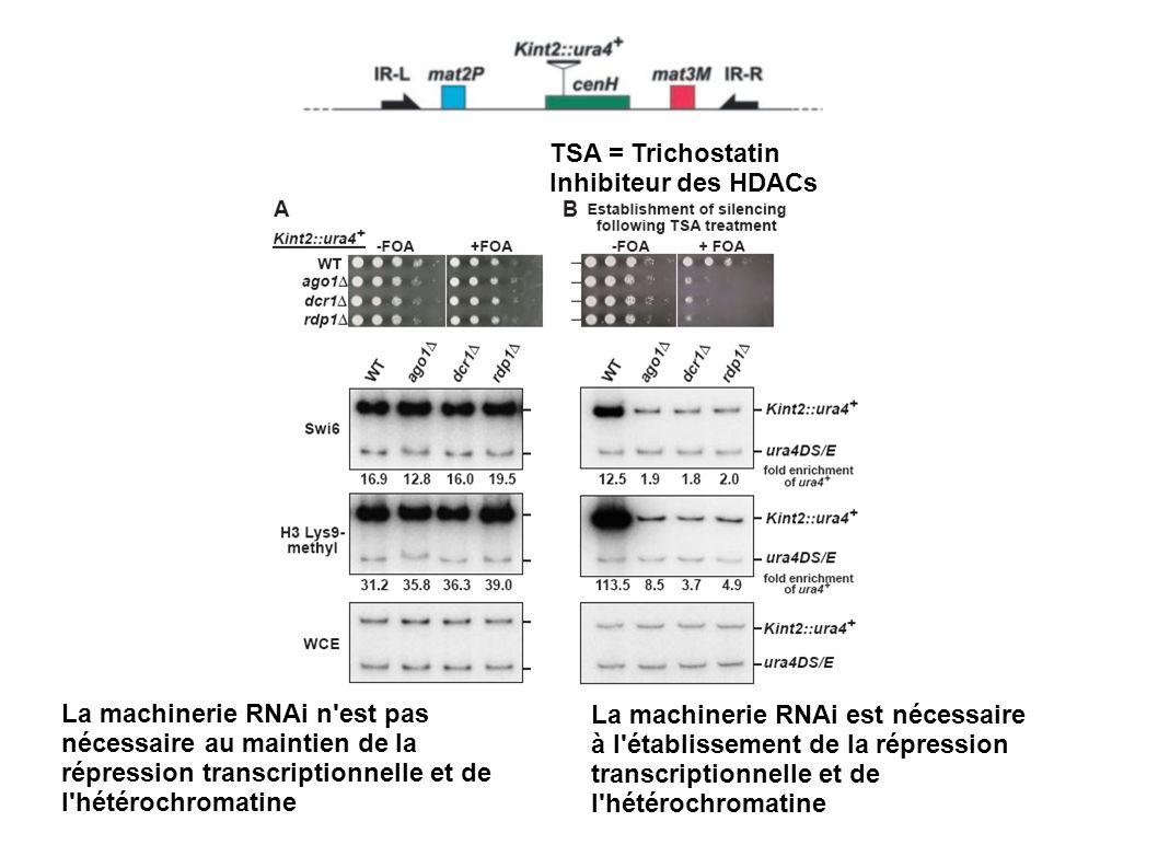 TSA = Trichostatin Inhibiteur des HDACs.