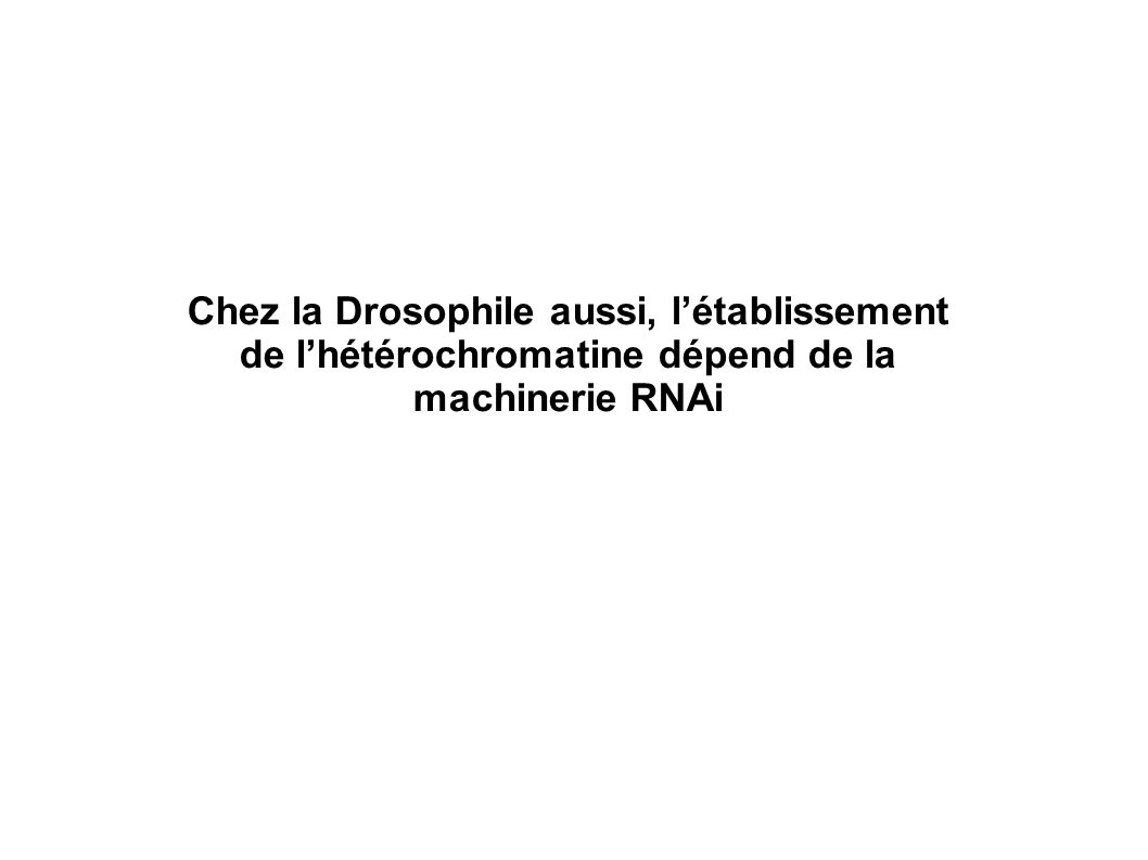 Chez la Drosophile aussi, l'établissement de l'hétérochromatine dépend de la machinerie RNAi