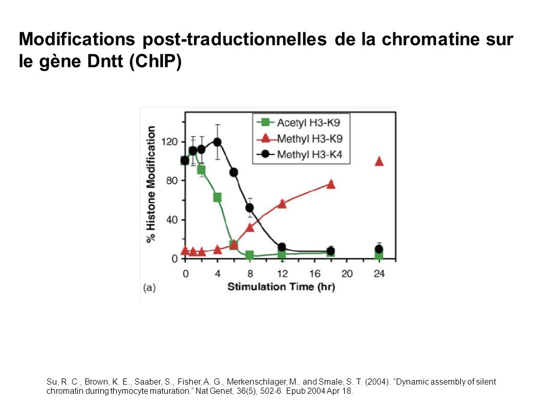 Modifications post-traductionnelles de la chromatine sur le gène Dntt (ChIP)